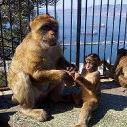 Bienvenue à Gibraltar